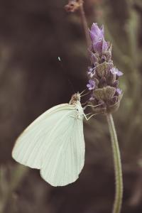 foto-mariposa-fotografa-leonela-arguello